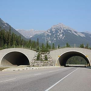 baniff national overpass - flickr
